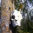 Skull on a tree